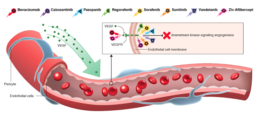 AntiAngiogenesisBloodVessel